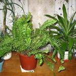 Комнатные растения: как правильно выбрать?