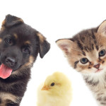 Выбор зоотоваров для домашних животных