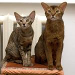 Зоотовары для собак и котов: изучаем полки магазинов