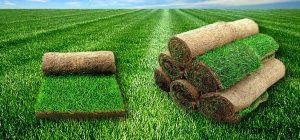 Рулонные газоны – отличный способ украсить собственный участок