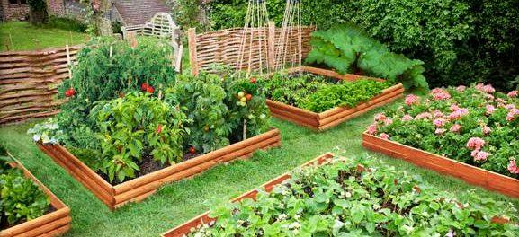 Учимся выращивать цветы, овощи и фрукты самостоятельно